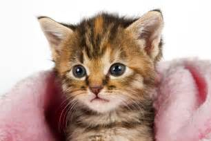 feline cat cats animals wallpapers and images hd photos gallery