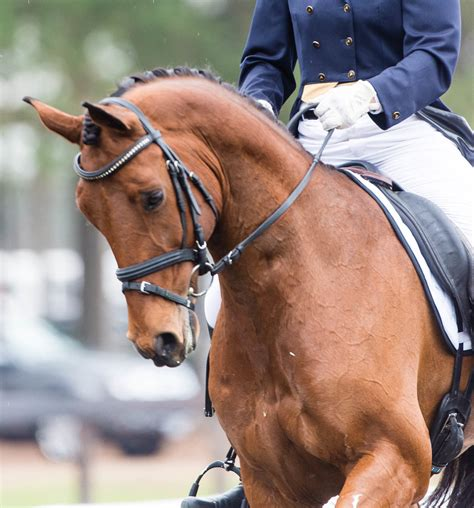 dressage horse connection contact today