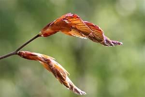 Wann Johannisbeeren Pflanzen : wann ist herbst hainbuchenhecke wann ist die beste pflanzzeit die kleine bilderwelt wann ist ~ Orissabook.com Haus und Dekorationen