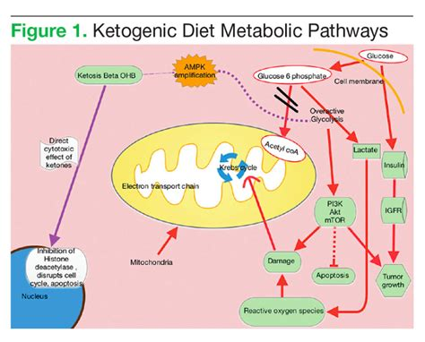 ketogenic diets  cancer february  issue federal
