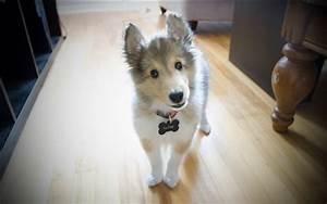 Hund Im Haus : hund im haus hintergrundbilder hd bild ~ Lizthompson.info Haus und Dekorationen