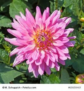 Schnell Wachsende Büsche : pflanze mit d ~ Whattoseeinmadrid.com Haus und Dekorationen