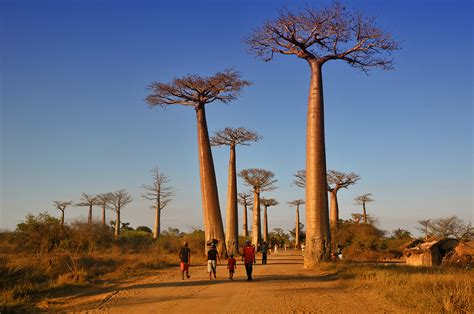 The country of Baobabs | MADAMAGAZINE