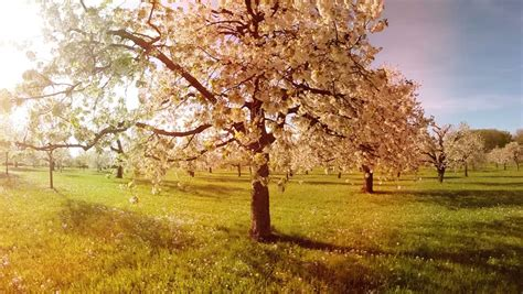 beautiful spring trees background aerial stock footage