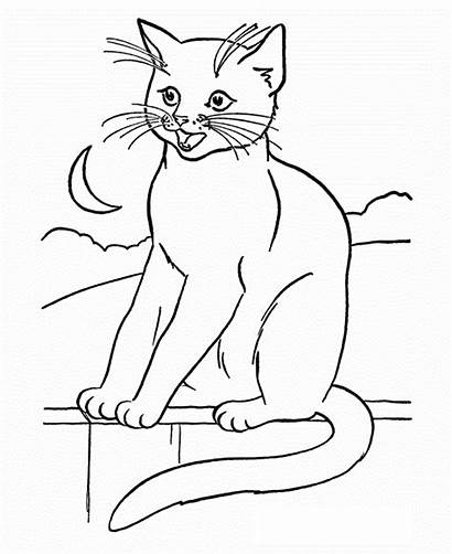 Coloring Cats Pages Popular
