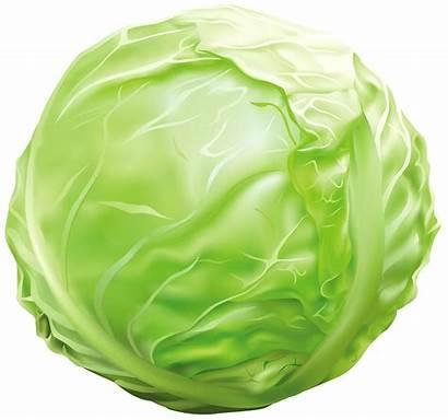 Cabbage Clipart Vegetables Vegetable Clip Repolyo Transparent
