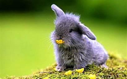 Animals Bunnies Nature Wallpapers Wallpaperup