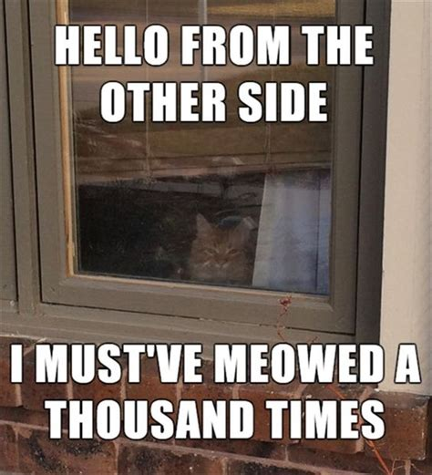 Funny Quotes And Memes - 30 funniest cat memes quotes words sayings feedpuzzle
