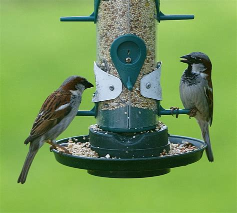 best bird feeders for small birds bird cages