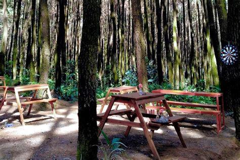 hamparan hutan pinus  hangatnya sumber air panas gunung