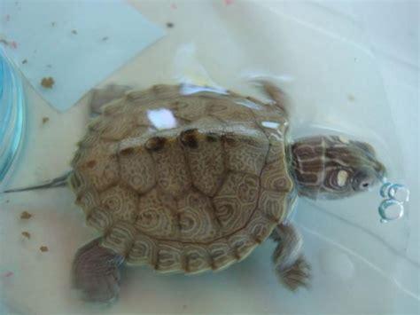 voici une nouvelle parmis vous mais besoin d aide quelle esp 232 ce tortue d eau douce forum