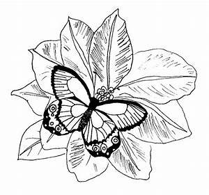 Free coloring pages of butterfly and flowers