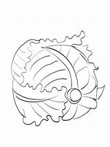 Cabbage Coloring Vegetables Ausmalbilder Kohl Colorear Dibujos Repollo Template Templates Ausdrucken Malvorlagen Kostenlos Zum Imprimir Gratis sketch template