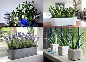 Plantes Pour Chambre : les 5 plantes parfaites pour la chambre coucher dormez mieux astuces blagues ~ Melissatoandfro.com Idées de Décoration