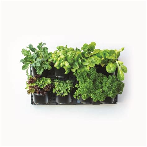 holman vertical greenwall garden kit bunnings warehouse