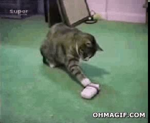 scared cat gif find share  giphy