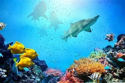 Reef Sharks 4k Uhd Coral Desktop Wallpapers