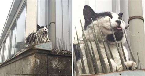 cats  evolving scared people  sharing pics