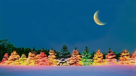 colorful tree   cold winter night hd wallpaper