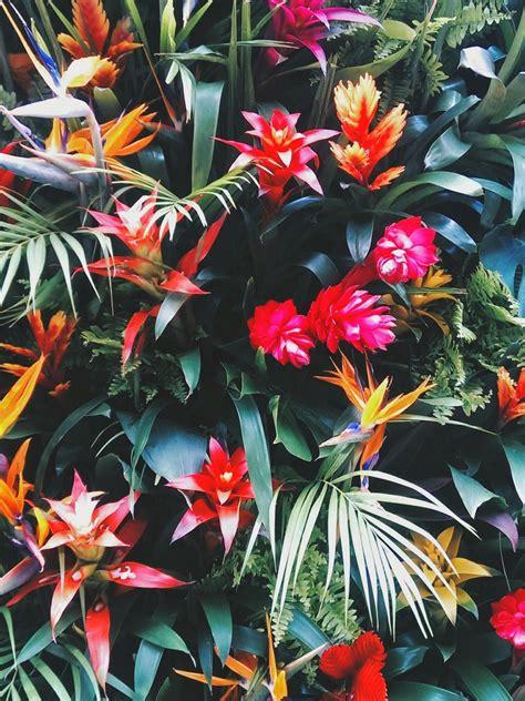Tapisserie Fleurs by Fond Tapisserie Tropicale Exotique Fleur D 233 Coration