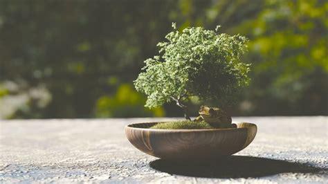 Japanische Zen Gärten by Japanischer Garten Zen Garten Anlegen Bilder Tipps