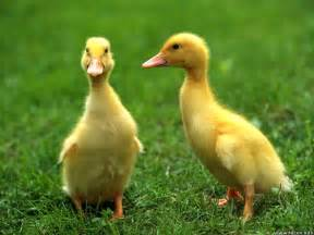 newborn photography near me duckies