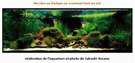 aquarium ideal pour combattant l aquarium id 233 al pour un betta splendens blue perfume