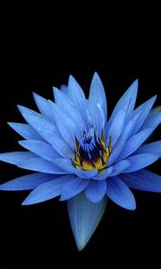 Sony Xperia Z Stock Blue Flower Wallpapers