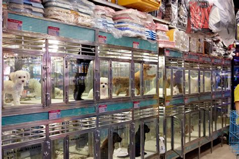 top 28 pet shops in arkansas pet stores in little rock