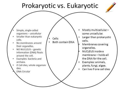 prokaryote vs eukaryote worksheet prokaryotic and eukaryotic cells worksheet