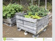 Vegetable Plants In Raised Garden Bed Stock Photo Image