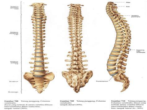 Janin Sering Bergerak Mengenal Gejala Gangguan Tulang Belakang Sejak Dini Tips