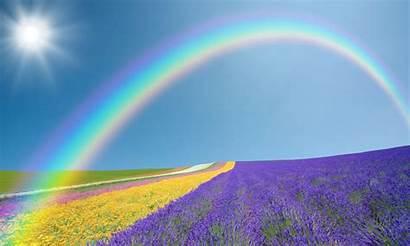Rainbow Wallpapers Flowers Field