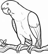 Parrot Coloring Pages Cute Printable sketch template