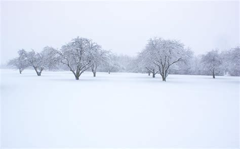 Background Images Snow by Snow Backgrounds Pictures Wallpaper Cave