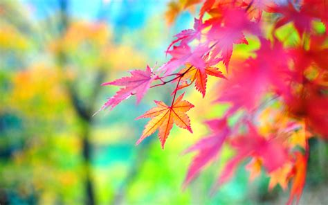 Colourful Autumn Background by Autumn Colorful Leaves Hd Desktop Wallpapers 4k Hd