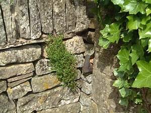 Pflanzen Für Trockenmauer : so wird eine trockenmauer gebaut ploberger ~ Orissabook.com Haus und Dekorationen