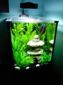 aquarium larger  bamboo  pinterest