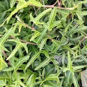 Graine Herbe A Chat : herbe chat graine ~ Melissatoandfro.com Idées de Décoration