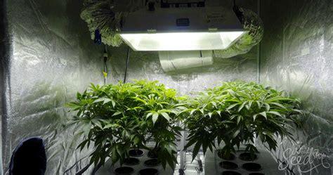 chambre de culture cannabis complete chambre de culture complete cannabis chambre culture