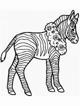 Zebra Coloring Printable sketch template