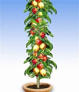 Apfelbaum Für Balkon : s ulenapfel braeburn ~ Michelbontemps.com Haus und Dekorationen