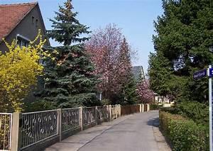Kleine Bäume Für Vorgarten : zierkirschen kleine b ume 08 prunus cerasifera nigra ~ Michelbontemps.com Haus und Dekorationen