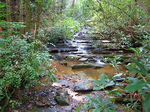 Panther, Fall, In, The, Chattahoochee, National, Forest