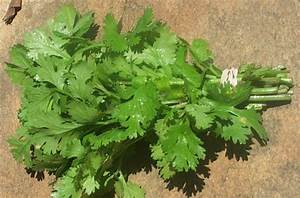 The Bun Kabab: Wonders of Nature - Basic Ingredients