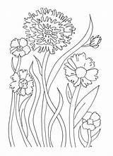 Printable Flowers Flower Coloring Pages Printables sketch template