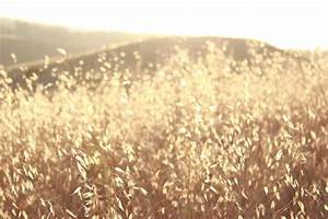 field, photography, sun - image #527905 on Favim.com
