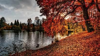 Autumn Park Foliage Resolution Nature 4k Published