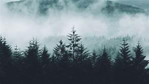 Floresta, montanhas, névoa, manhã, paisagem natural Papéis ...