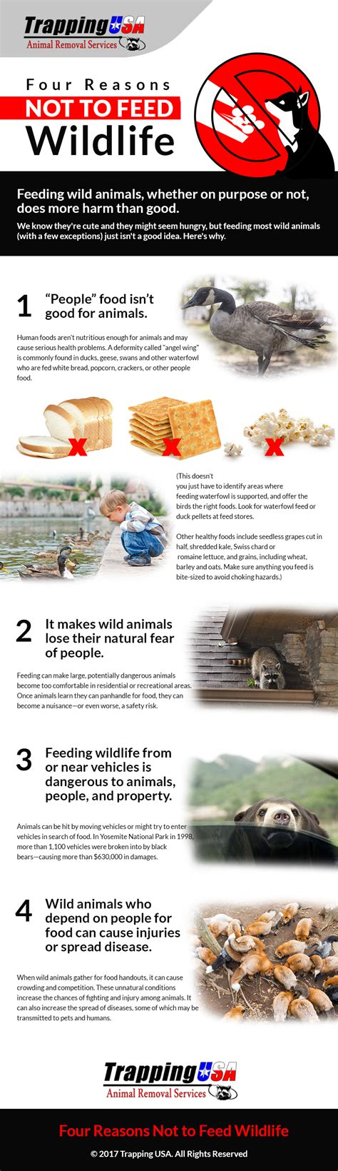 Four Reasons Not To Feed Wildlife [infographic]  Trapping Usa